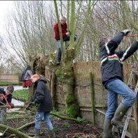 Help mee de wilgenbosjes te onderhouden
