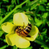 Veel verschillende planten, dan veel bijen