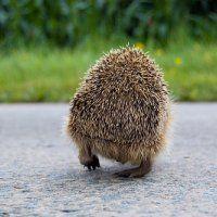 Partij voor de Dieren: minder asfalt en meer groen in Pijnacker-Nootdorp