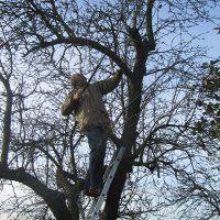 Workshop Vruchtbomen snoeien