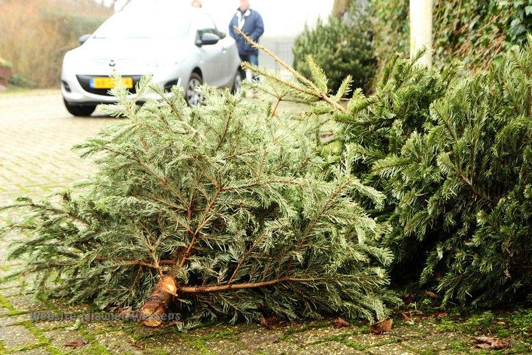50 cent voor elke Kerstboom