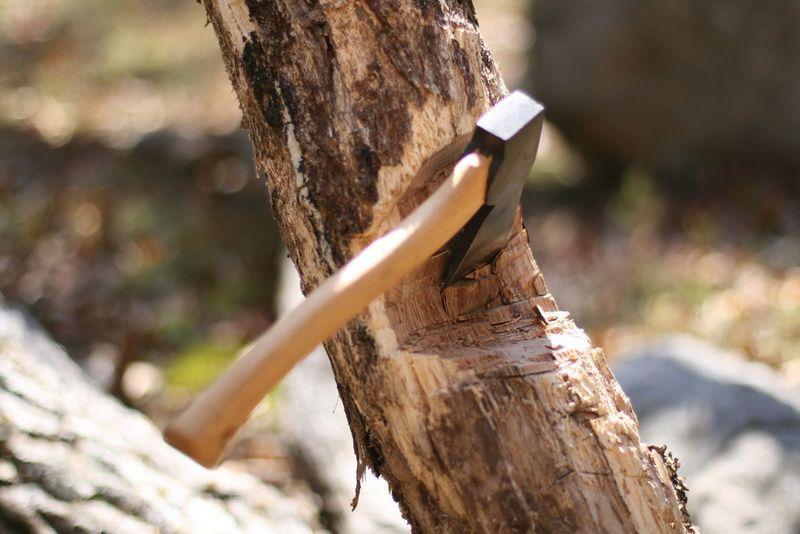 Vragen over bomenkap in Nootdorp