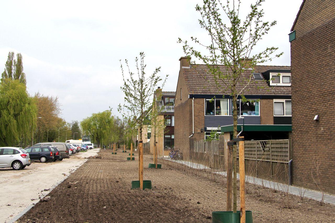 Nieuwe bomen op Meidoornlaan en het gras is ingezaaid