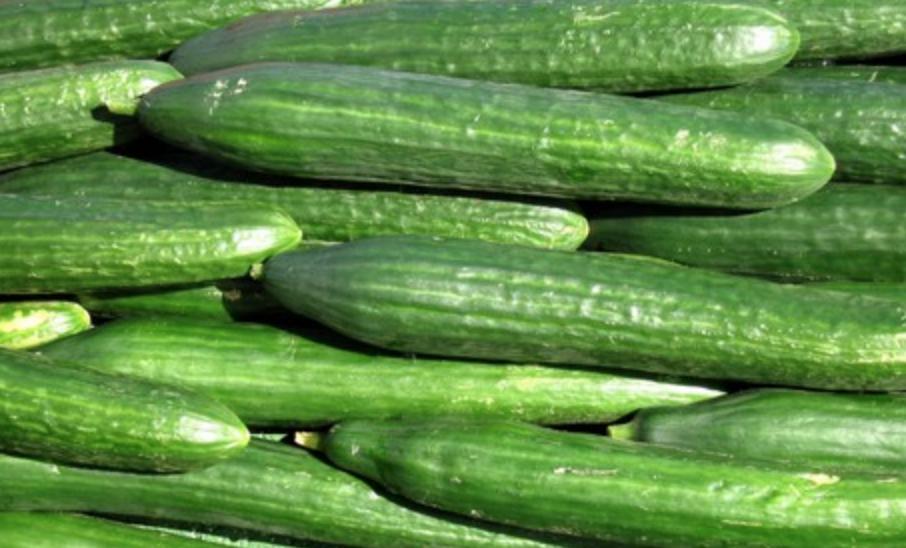 NK komkommers sorteren in Nootdorp