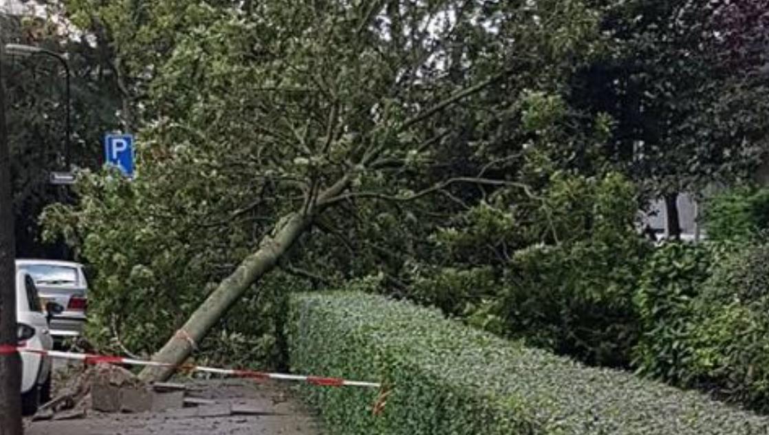 Veel schade door storm in regio