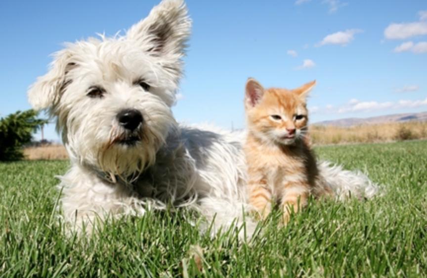 Samen praten over dierenwelzijn